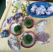 Muscheln Austern als Somnerdeko