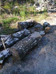 Brennholz Birke 100cm Ungespalten 0