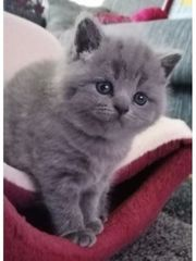 Kuscheln Kätzchen sehr süß