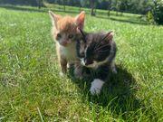 Fünf süße ERK Kätzchen tauchen