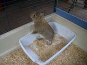 Kleintier Käfig mit Jungem Mai2020
