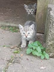 Geschwisterpaar Kätzchen katzen Babykatze