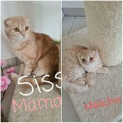 Sissi und Maja suchen ein