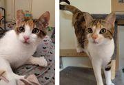 junge Katzen Thelma und Lousie