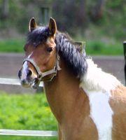 Suche Pferde-Heu