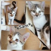 Baby Kater Kitten Sam geimpft