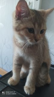 Helfer für Ausbau eines Katzenzimmers