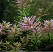 Aquariumpflanzen abzugeben
