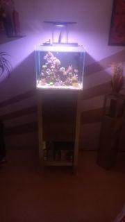 Fluval Reef M40 Nano Aquarium