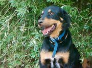 Cäsar wundervoller Hundemann ca 2