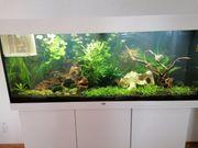 Wasserpflanzen für Aquarium