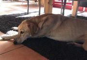 temperamentvolles Hundemädchen sucht Gassigeher