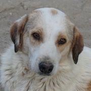 Bakira geb 05 2015 lebt