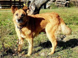 SWEETY - braucht nur ein weiches: Kleinanzeigen aus Rabenau - Rubrik Hunde