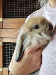 3 kaninchen zu verkaufen