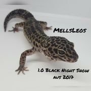 Leopardgecko 1 0 Black Night