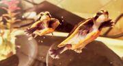 Baby-Wasserschildkröten