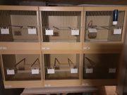 Zuchtboxen 3er