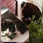 Katze Mietzi 10 Jahre kastriert