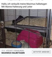 Halbetagen vom Maximus Käfig