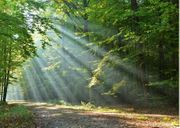 Nachrücker für Waldkindergartenplatz ab Oktober