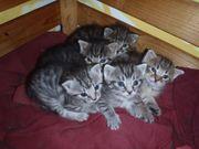2 süße Tigerkatzen Kinder