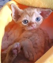 Wunderschöne Kitten Mädchen und Jungen