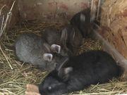 Kaninchen Absetzer