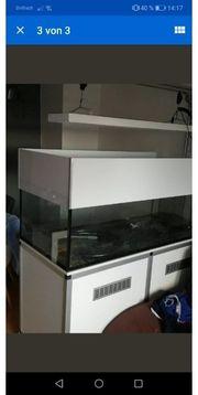 meerwasseraquarium Meerwasser aquarium