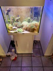 verkaufe ein komplettes meerwasser Aquarium