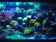 Aquariumbecken rechteckig für Meerwasser