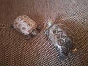 Schildkröten komplett abzugeben
