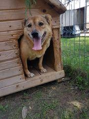 Roscuta eine Hunde Oma hofft