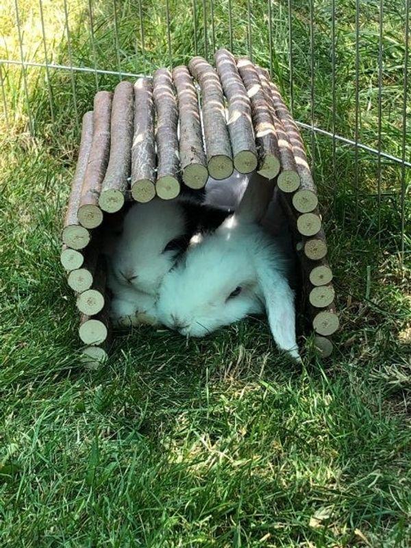 Kaninchen inklusive Stall Auslauf und