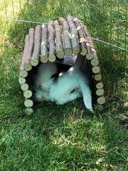 Kaninchen inklusive Zubehör