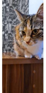 1Jahr alte Katze