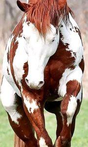 Freizeit Pferde Stute immer noch