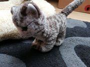 steiff Katze