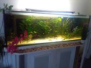 aquarium350l