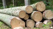 Brennholz Rundholzpolter Fichte Tanne