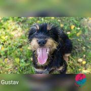Gustav- wünscht sich auch das