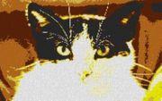 Vorlage für Ministeck Cat 80x60cm
