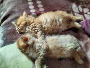 2 süße katchen