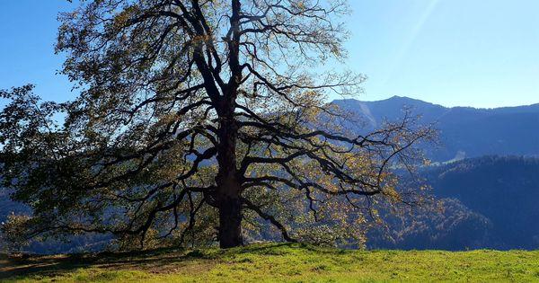 Berghütte Ferienhaus Alphütte Maisäß Vorsäß