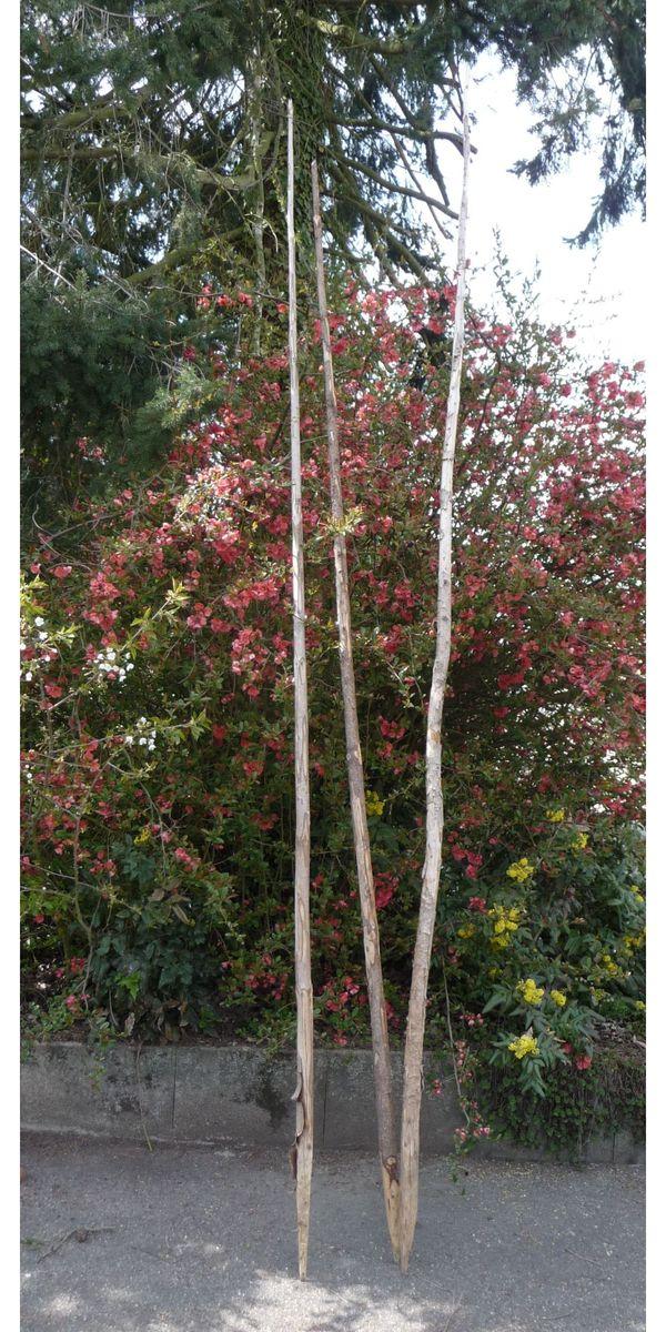 Bohnenstangen Pflanzstab Rankhilfe PflanzenstÃŒtze Holzstangen