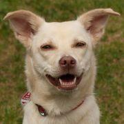 Sall - Mischling - 1 Jahr - Tierhilfe