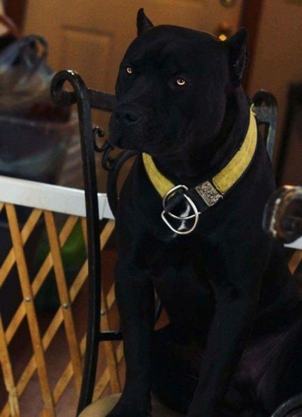 Private Hundebetreung