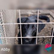 Abby - eine Hausnummer sucht ein