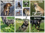 Liebe Tierschutzhunde suchen liebe Familien