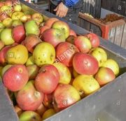 Apfelsaft Direktsaft Bio Streuobst